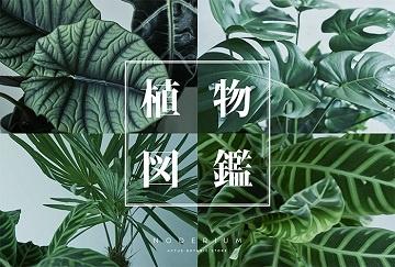 アクタス・六甲店で「植物図鑑」のポップアップを開催。