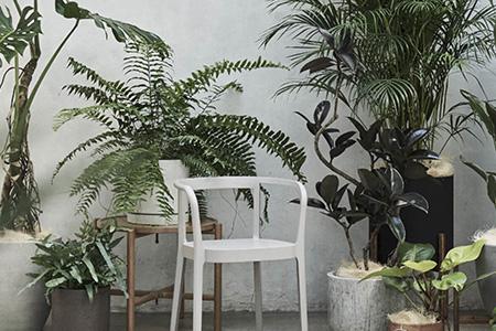 グリーン 植物 インテリアグリーン 観葉植物 アクタス インドアグリーン