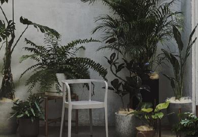 Green インテリア植物